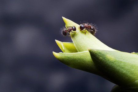 antrey: Macro of Black Ant crawling on green plant in night