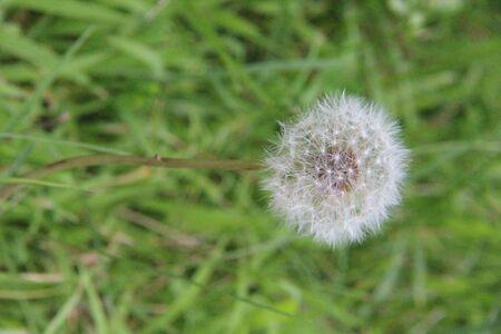 wishy flower