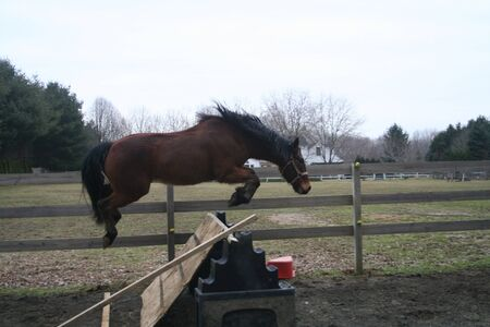 horse freejump photo