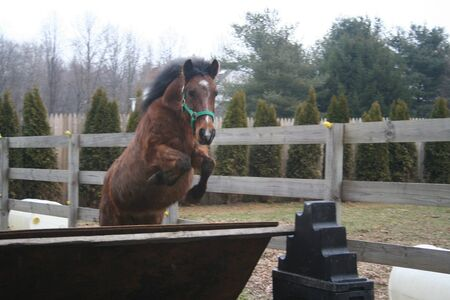 pony free jump photo