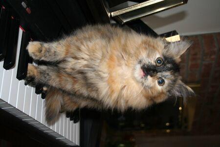 kitty on a piano Stock Photo