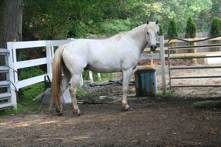 pony standing photo