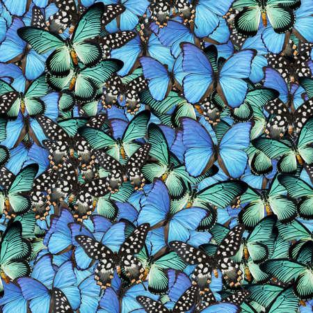 seamless: Butterflies Seamless Texture Tile Stock Photo