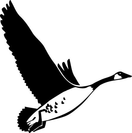 canada goose: Canadian Goose Illustration