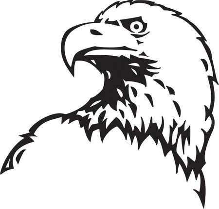 aigle: Pygargue � t�te blanche