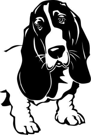 Basset Hound Stock Vector - 12945162