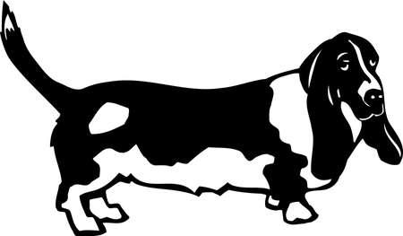 Basset Hound Stock Vector - 12945130