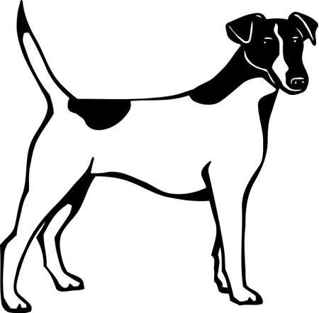 fox terrier: Fox Terrier