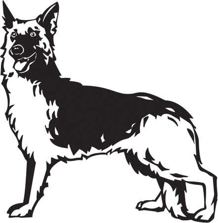 police dog: German Shepherd Illustration