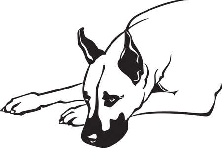 Great Dane Stock Vector - 12945121