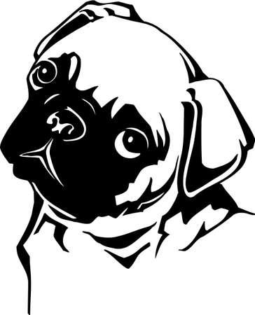 Pug Vector