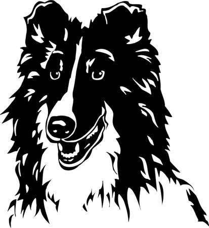 sheepdog: Shetland Sheepdog