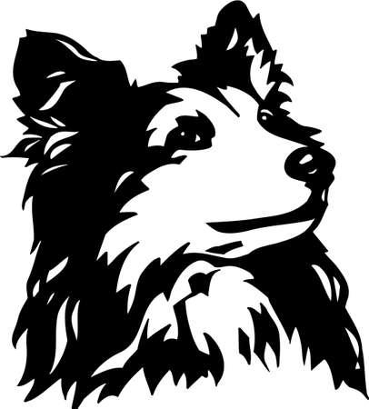 sheepdogs: Shetland Sheepdog