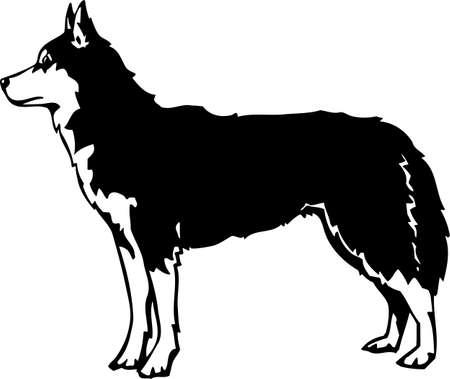 Siberian Husky Stock Vector - 12945141