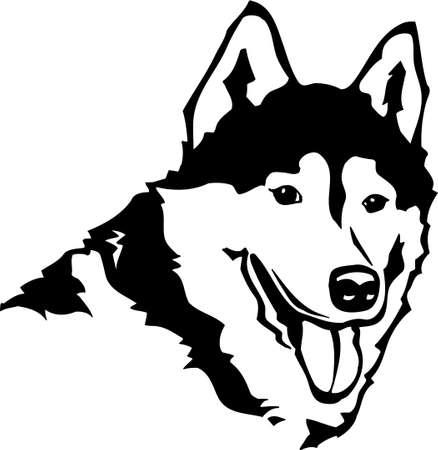 Siberian Husky Stock Vector - 12945146