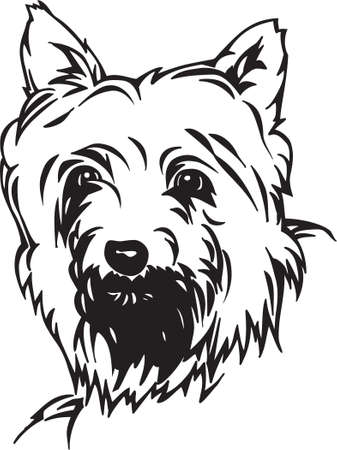 Silky Terrier Vector