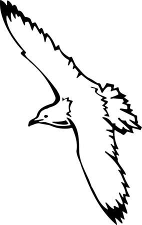sea gull: Seagull Illustration