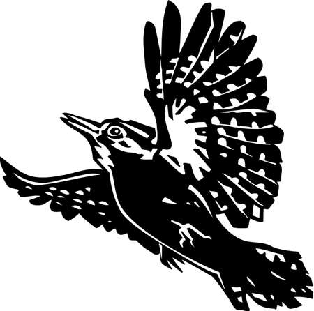 spotted: Spotted Woodpecker Illustration