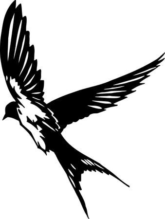 barn swallow: Swallow Illustration