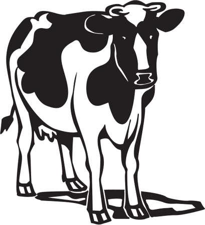 Vache Banque d'images - 13014939