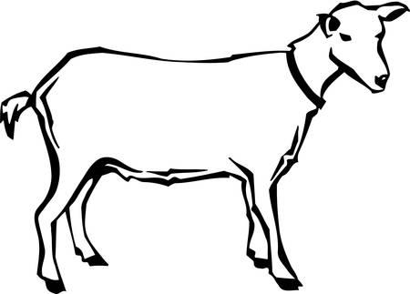 kid goat: Goat