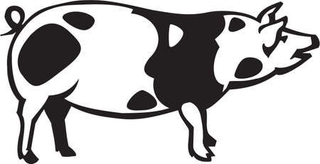 Schwein Standard-Bild - 13014883