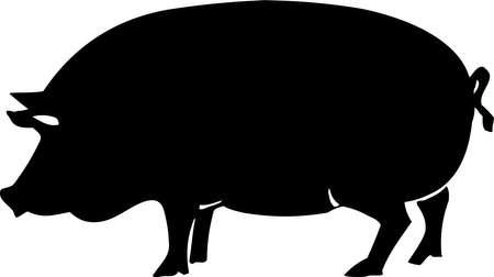 Pig Zdjęcie Seryjne - 13014890