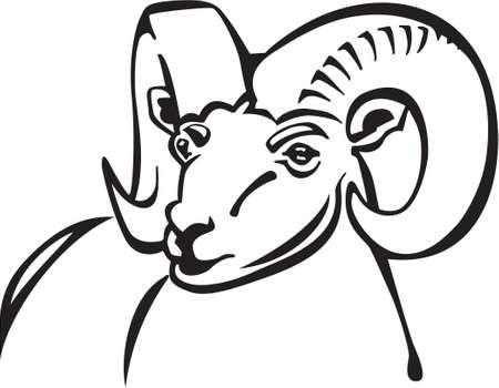 Ram Stock Vector - 13014905
