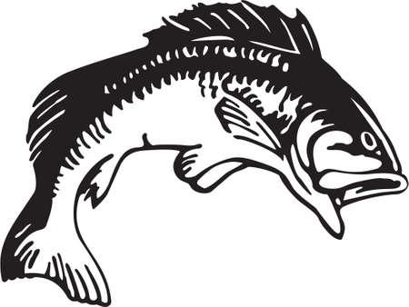 bass fish: Bass