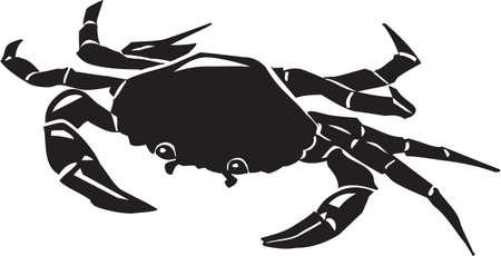 Crab 版權商用圖片 - 13014884