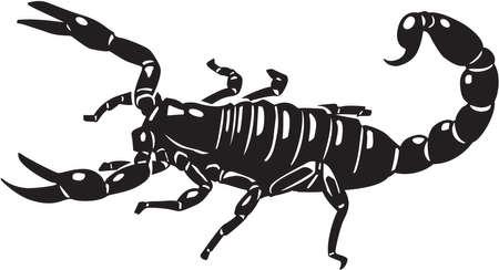 Scorpion Illusztráció
