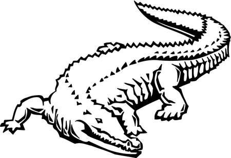 Alligator Stock Vector - 13065735