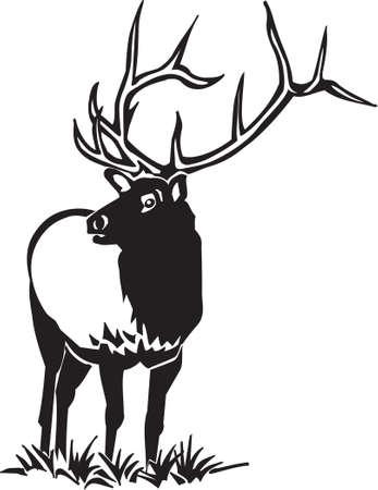 Elk Фото со стока - 13050646