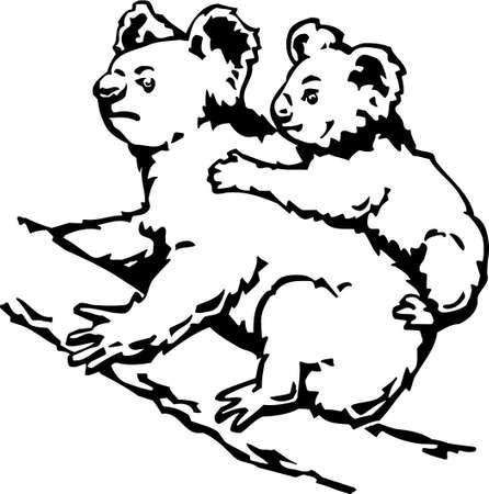 koala bear: Koala Bears