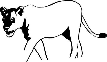 Lioness Иллюстрация