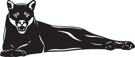 cougar: Puma