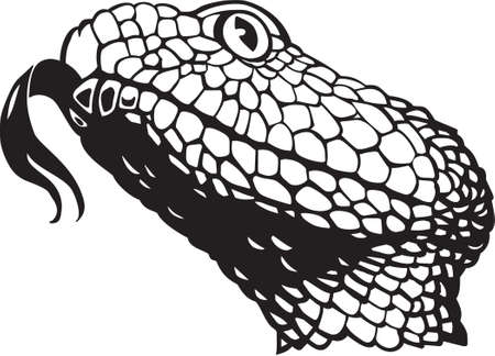serpiente de cascabel: Serpiente de cascabel