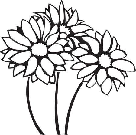 Chrysanthemums Illusztráció