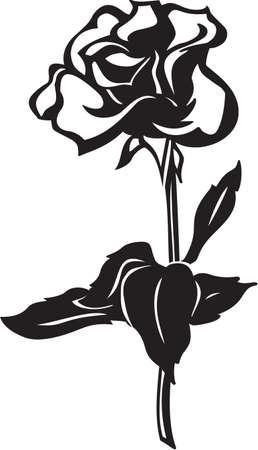 long stem roses: Rose