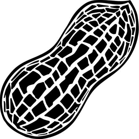 Peanut Stock Vector - 13351946