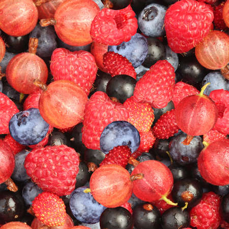 seamless tile: Mixed Berries Seamless Texture Tile Stock Photo