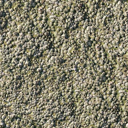 barnacles: Barnacles Tile Seamless Texture