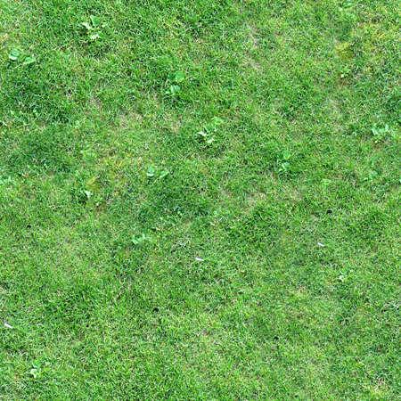 Grass Seamless Texture Tile Archivio Fotografico