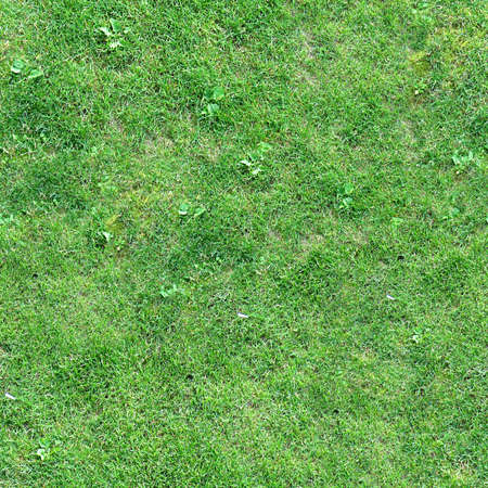Grass Texture Tile Seamless Banque d'images - 14063382