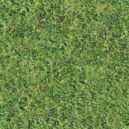 seamless tile: Grass Seamless Texture Tile Stock Photo