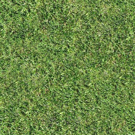 Grass Seamless Texture Tile Banque d'images