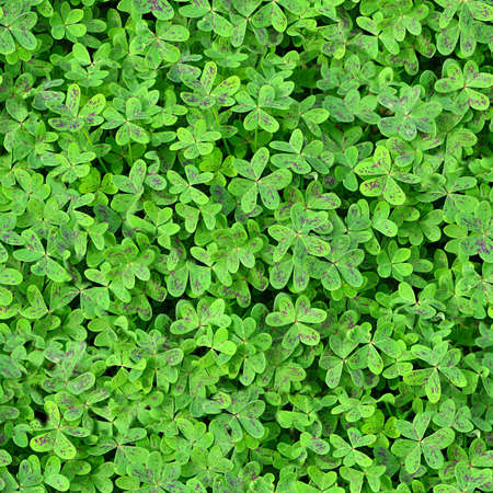 Ground Cover Seamless Texture Tile Banque d'images