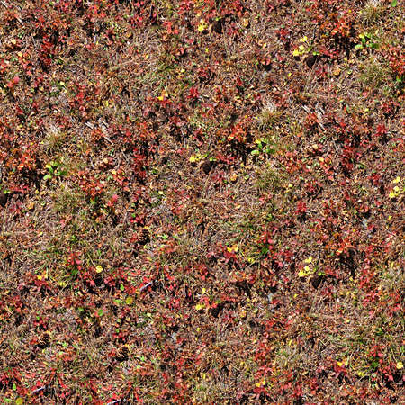 ground cover: Ground Cover Seamless Texture Tile Stock Photo