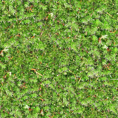 Ground Cover Seamless Texture Tile 写真素材