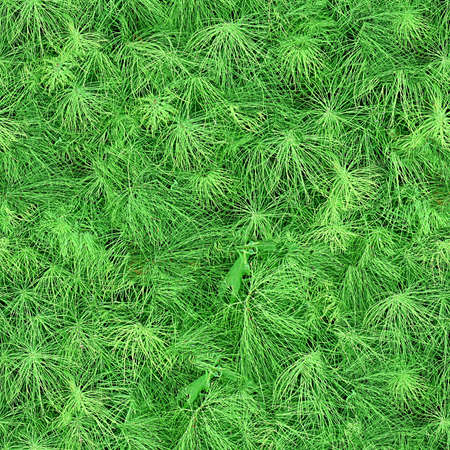 seamless tile: Pine Needles Seamless Texture Tile
